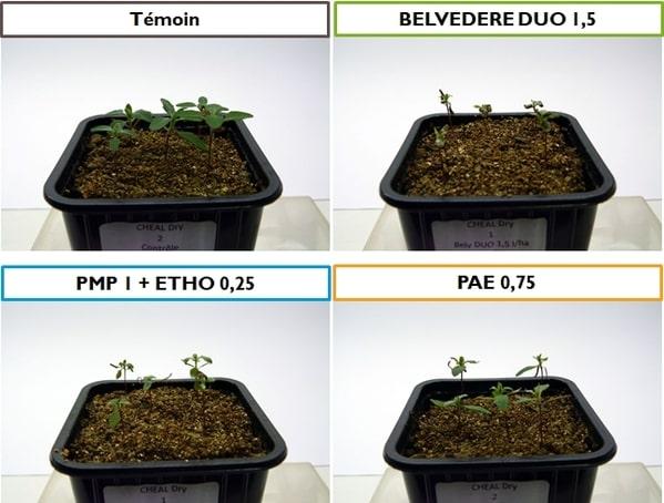 Essais_Belvedere_Duo_J14-1